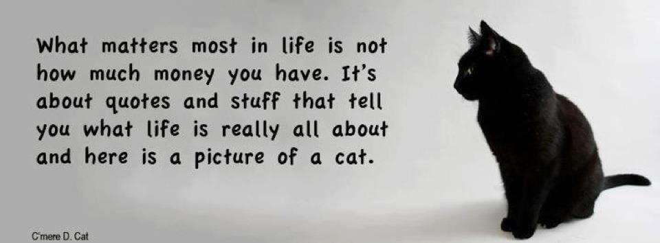 Life quote cats